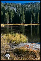 Shore with autumn grasses, Siesta Lake. Yosemite National Park ( color)