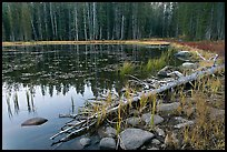 Shoreline in fall, Siesta Lake. Yosemite National Park ( color)
