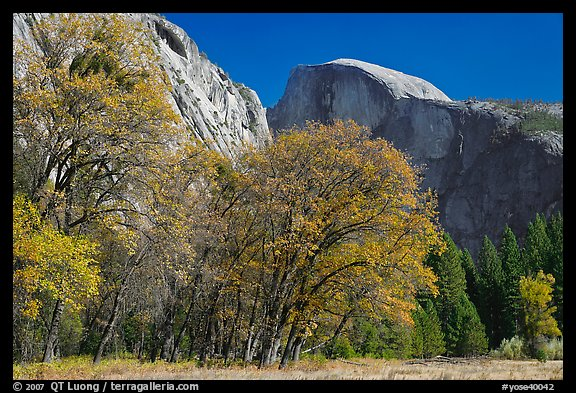 Trees in autumn foliage and Half Dome, Ahwahnee Meadow. Yosemite National Park, California, USA.