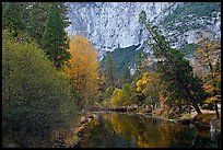 Trees in fall foliage bordering Merced River. Yosemite National Park, California, USA.
