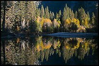 Sunlit trees and reflections, Merced River. Yosemite National Park, California, USA.
