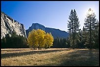 Ahwahnee Meadow with sun shinnig through tree, early morning. Yosemite National Park, California, USA.