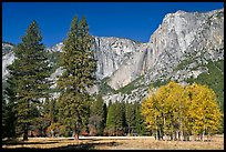 Aspens, pine trees, and Yosemite Falls wall in autum. Yosemite National Park, California, USA.