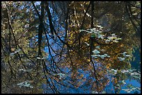 Reflections of cliffs and trees in creek. Yosemite National Park ( color)