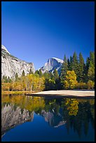 Trees in fall foliage and Half-Dome reflected in Merced River. Yosemite National Park ( color)