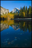 Fallen leaves, Merced River, and Half-Dome reflections. Yosemite National Park ( color)