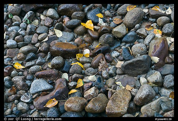 Autumn leaves and pebbles. Yosemite National Park, California, USA.