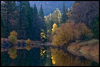 Bright autumn tree, Merced River. Yosemite National Park ( color)
