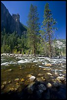 Rostrum, tall trees, and Merced River. Yosemite National Park ( color)