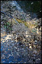 Half-Dome reflected through fallen leaves, Mirror Lake. Yosemite National Park ( color)