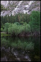Refections and green trees, Mirror Lake. Yosemite National Park ( color)