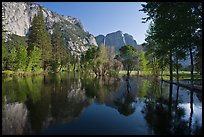 Swollen Merced River reflecting trees and cliffs. Yosemite National Park ( color)