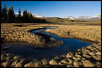 Meandering stream and grasses, early spring, Tuolumne Meadows. Yosemite National Park ( color)