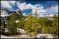 Pine trees in spring and Fairview Dome, Tuolumne Meadows. Yosemite National Park ( color)
