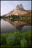 Lupine, Cathedral Peak, and reflection. Yosemite National Park ( color)