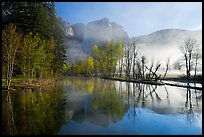 Merced River and early morning fog. Yosemite National Park ( color)