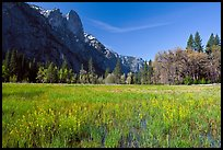 Wildflowers in flooded Cook Meadow,. Yosemite National Park ( color)