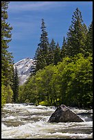 High waters and rapids in Merced River. Yosemite National Park ( color)