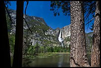 Yosemite Falls and flooded meadow framed by pines. Yosemite National Park ( color)