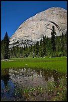Half-Dome reflected in Lost Lake. Yosemite National Park ( color)