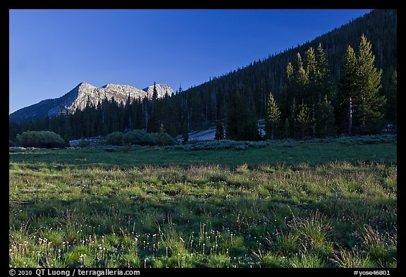 Meadow and Potter Point, Lyell Canyon. Yosemite National Park, California, USA.