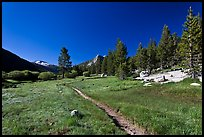 Pacific Crest Trail, Lyell Canyon. Yosemite National Park ( color)