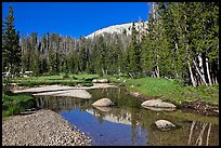 Stream in Long Meadow. Yosemite National Park ( color)