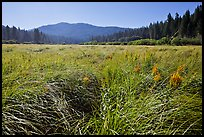 Wavona meadow in summer, morning. Yosemite National Park ( color)