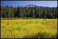 Wawona Dome viewed from Wawona meadow. Yosemite National Park, California, USA.