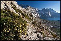 Wildflowers on slope, Upper McCabe Lake and Sheep Peak. Yosemite National Park ( color)