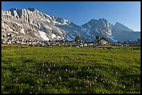 Meadow with summer flowers, North Peak crest. Yosemite National Park ( color)