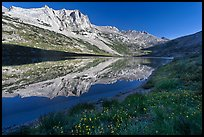 Flowers, Sheep Peak reflected in Roosevelt Lake. Yosemite National Park ( color)