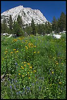 Flowers, forest, and peak. Yosemite National Park ( color)
