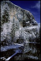 East Face of El Capitan and Merced River in winter. Yosemite National Park ( color)