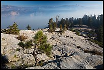 Pine sapling on Sentinel Dome, Valley in smoke. Yosemite National Park ( color)