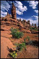 Wildflowers, sandstone pillars, Klondike Bluffs. Arches National Park, Utah, USA.