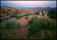 Yucca, Fiery Furnace, and La Sal Mountains, dusk. Arches National Park ( color)