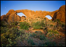 Wildflowers, South window and North window, sunrise. Arches National Park, Utah, USA.
