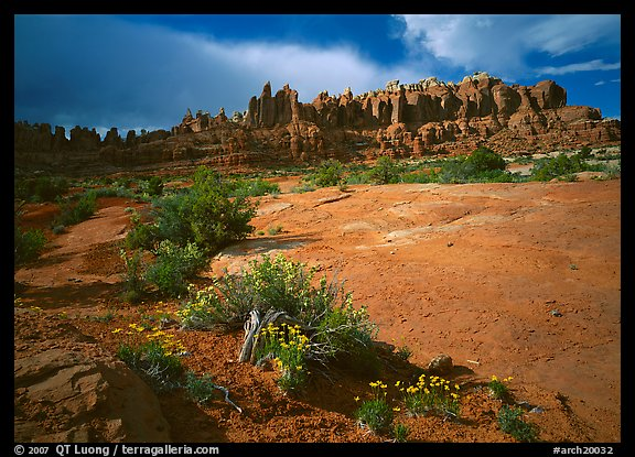 Wildflowers and rock pillars, Klondike Bluffs. Arches National Park (color)