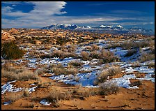 Petrified dunes, ancient dunes turned to slickrock, and La Sal mountains, winter afternoon. Arches National Park ( color)
