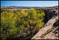 Cottonwood trees, Courthouse Wash rim, and La Sal mountains. Arches National Park ( color)