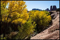 Cottonwoods in fall, Courthouse Wash and Towers. Arches National Park ( color)