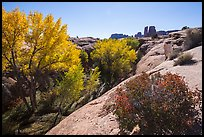 Bush and cottonwoods in autumn, Courthouse Wash and Towers. Arches National Park ( color)