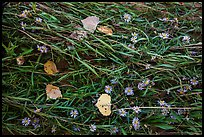 Ground view: Wildflowers, fallen leaves, and grasses, Courthouse Wash. Arches National Park ( color)