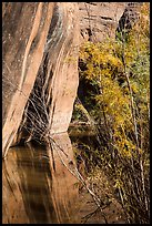 Sandstone walls, willows, and reflections, Courthouse Wash. Arches National Park ( color)