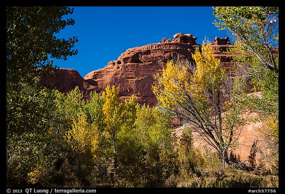 Cottonwood trees in autumn framing cliffs, Courthouse Wash. Arches National Park (color)