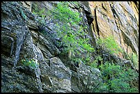 Side canyon wall, Long Draw. Black Canyon of the Gunnison National Park ( color)