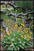 Flowers and fallen branches, High Point. Black Canyon of the Gunnison National Park, Colorado, USA.