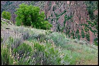 Grasses and canyon walls, East Portal. Black Canyon of the Gunnison National Park, Colorado, USA.