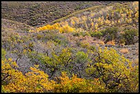 Hills with trees in autumn color. Black Canyon of the Gunnison National Park ( color)